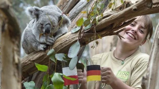 Koalabeer mag EK-duels niet meer voorspellen