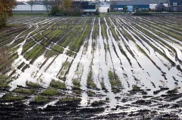 Rabobank helpt getroffen boeren en tuinders
