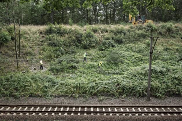 Amateurs gaan graven naar 'goudtrein nazi's'