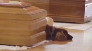 Aardbeving Italië: hond wijkt niet van overleden baasje