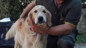 Mirakel in Italië: hond na negen dagen onder puin gered