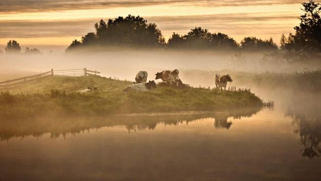 Wadden, Veluwe en Duinen mooiste natuur van Nederland: geen prijs voor Limburg