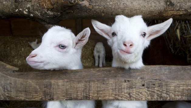 Kinderboerderij weigert hoofd te buigen voor gemeente