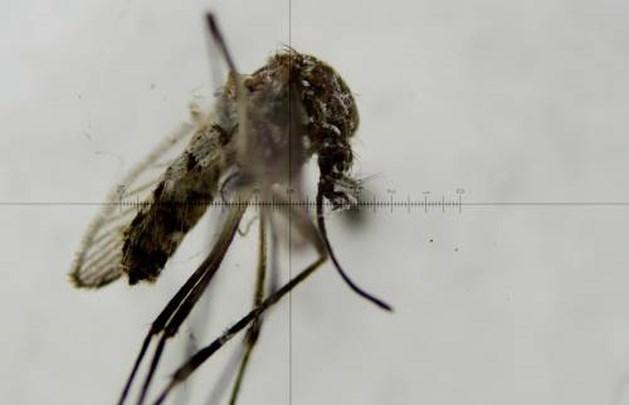 Zikavirus is niet langer grote bedreiging
