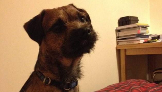 Baasjes denken hond nooit meer terug te zien; dan wordt hij met de taxi thuisgebracht