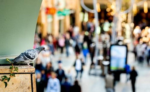 Winkelverkopen in eurozone flink gestegen