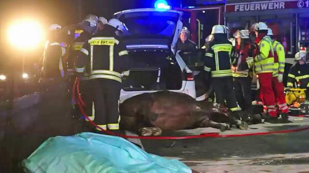 Vuurwerk jaagt paarden dood in op snelweg bij Venlo