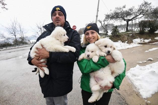 Drie puppy's gered uit Italiaans hotel na vijf dagen