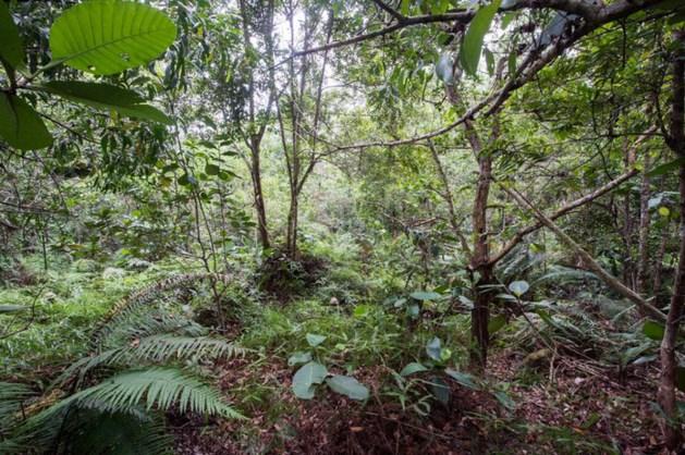Zie jij de 12 gecamoufleerde soldaten op deze groepsfoto in de jungle?
