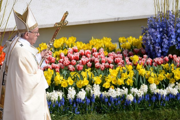 Meeuwen vernielen bloemen in Rome: 'nog nooit meegemaakt'