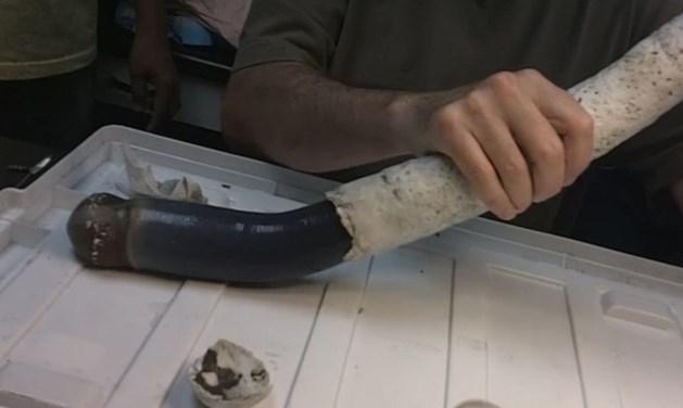 Wetenschappers ontdekken angstaanjagende reuzenworm