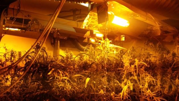 Politie ontdekt wietplantage met honderd planten in Brunssum