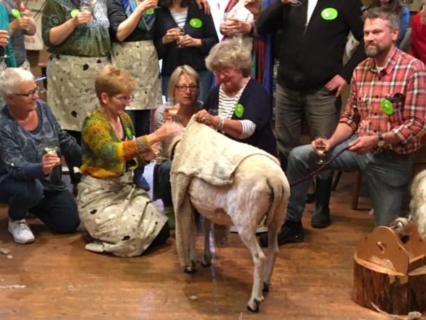 Nieuw wereldrecord: van schaap tot trui binnen vijf uur