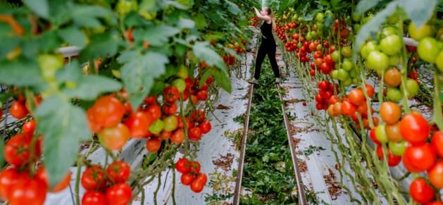'Jongeren uit rest van land nodig voor Limburgs vakantiewerk'