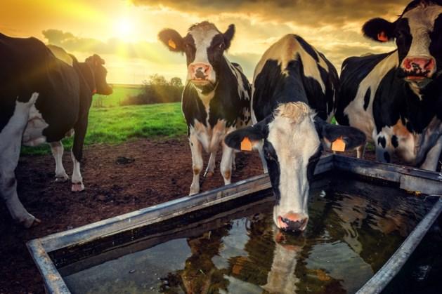 Brabo-boer niet welkom in Limburg