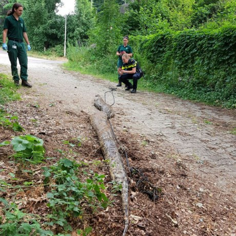 Gigantische wurgslang van bijna 6 meter gevonden langs spoor