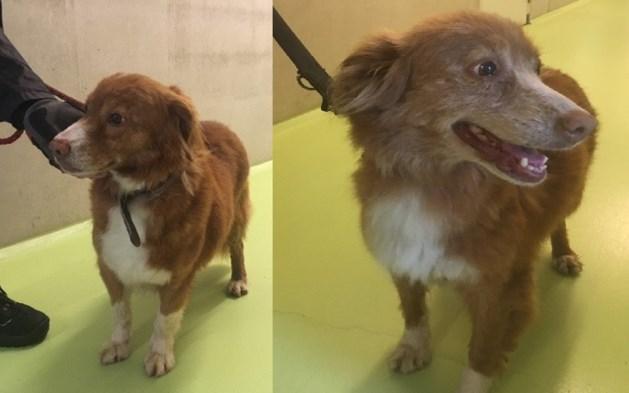 Twee verwaarloosde honden vastgebonden langs kanaal