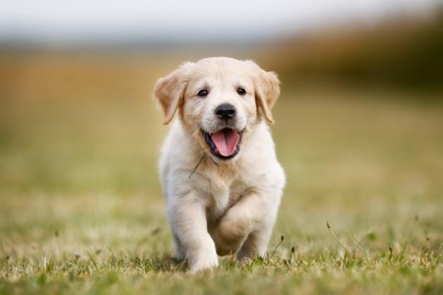 Gedetineerde vrouwen Ter Peel trainen puppy's
