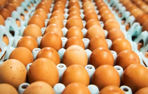 Ook eieren van Limburgse bedrijven besmet