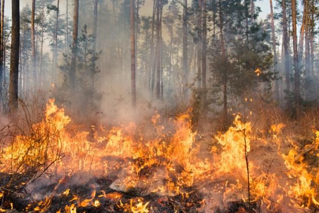Andere aanduiding risico op natuurbranden