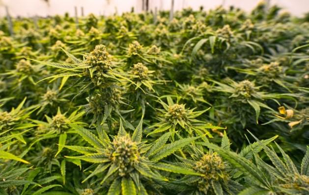Venray sluit vier woningen in verband met drugs