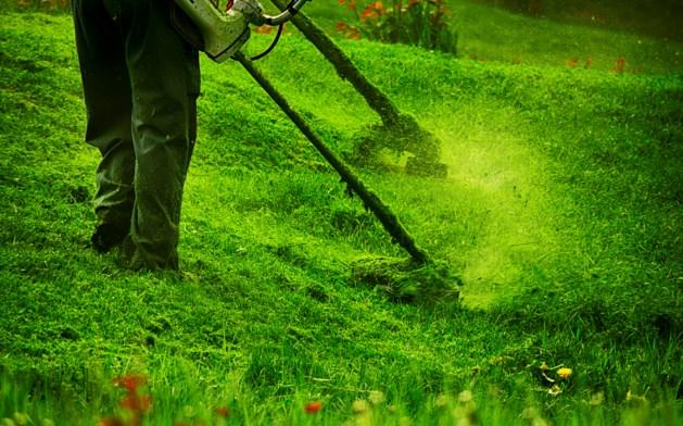 Vebego neemt Limburgs groenbedrijf over