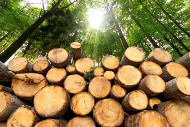Activisten wonen al 5 jaar in boomhut om bos te redden