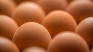 Klant neemt toevlucht tot boerderijwinkel voor eieren