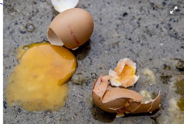 2,5 miljoen kippen dood om fipronil-schandaal