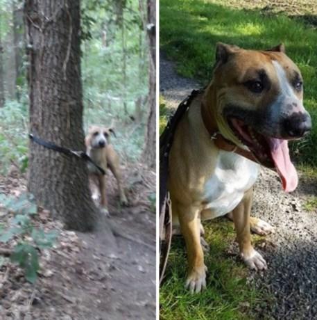 Hond vastgebonden en achtergelaten in Imstenraderbos