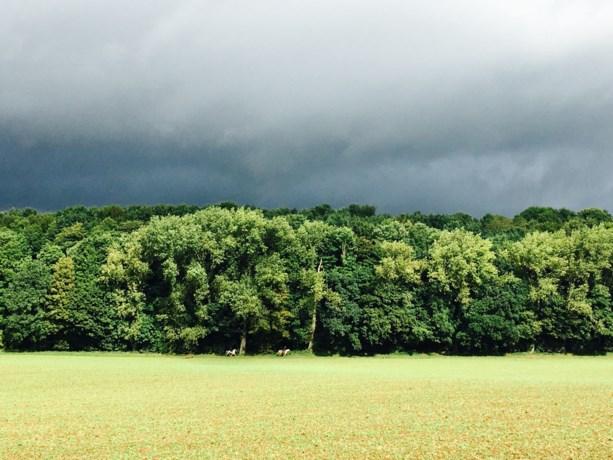 Forse plensbuien trekken zaterdag over Limburg