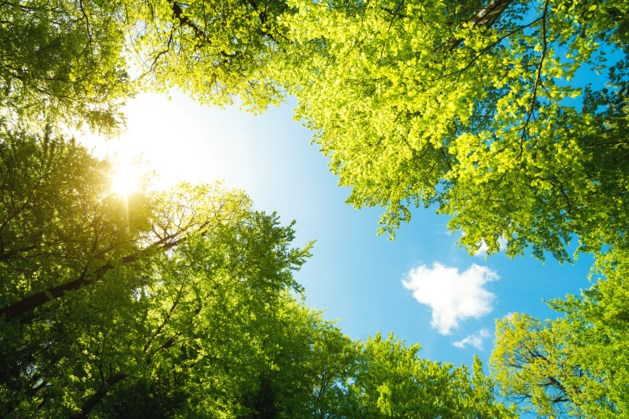 Kerkrade gaat ruim 300 levensbomen planten