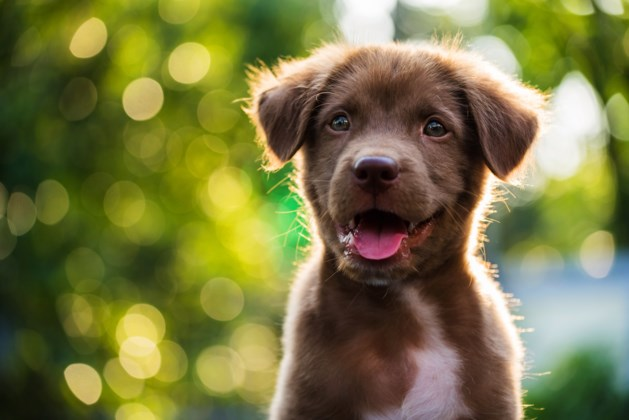 Politie waarschuwt voor hondenhater: puppy overleden na vergiftiging