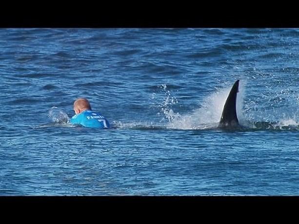 Belgische surfer ontsnapt ternauwernood aan witte haai