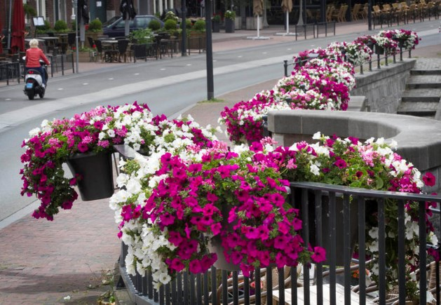 Nuth wil alle dorpskernen verfraaien met bloemen