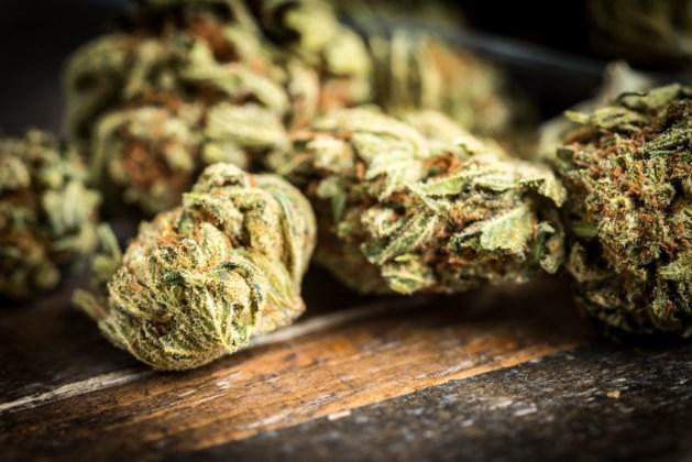 Man gearresteerd met zeven kilogram marihuana
