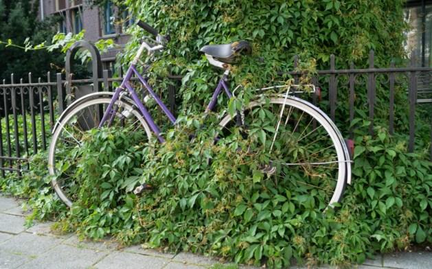 Limburgers fietsen het minst van alle Nederlanders