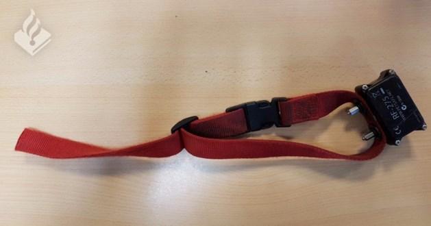 Welke agressieve hond draagt deze halsband?