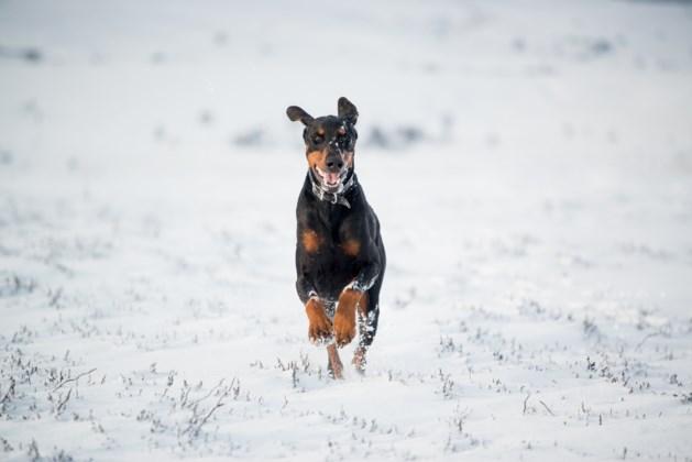 Hond Thor vermist tijdens koude winterdagen