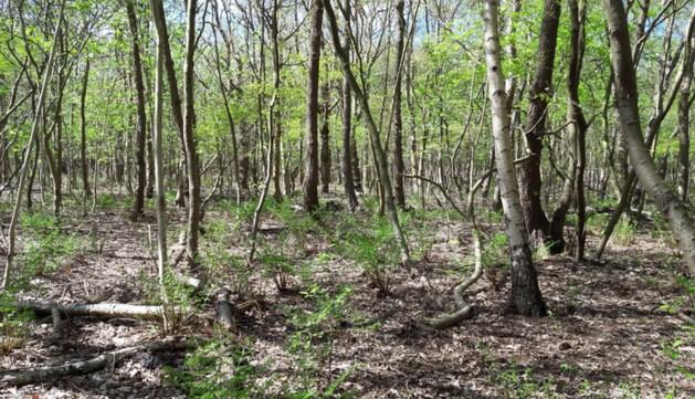 Natuurgebied Hambos begin februari weer open