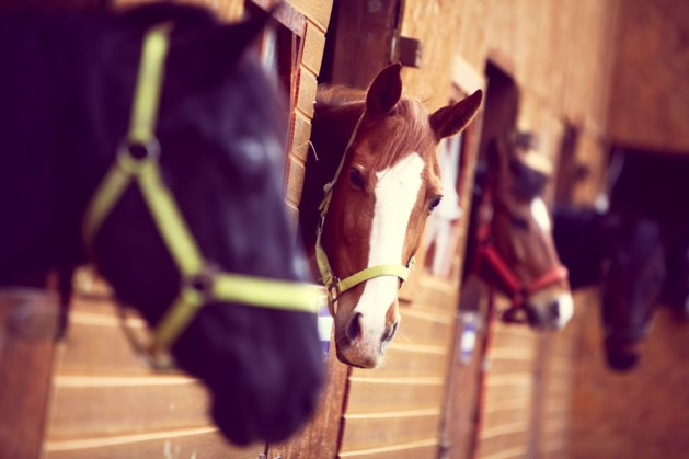 Paardenstal stuit op verzet van natuurorganisaties