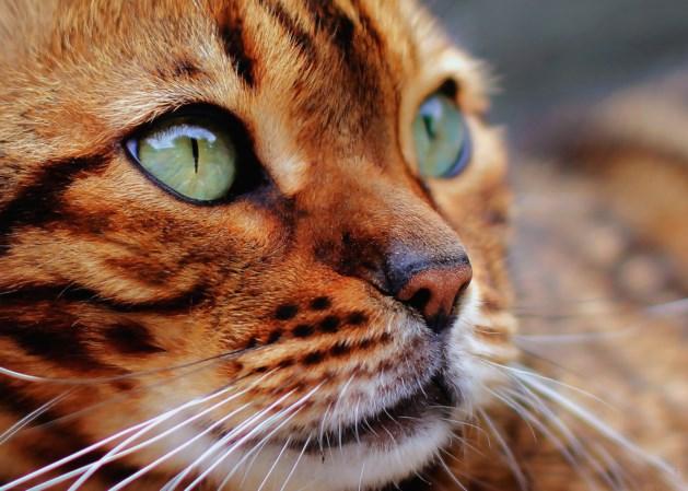 Politie zoekt kattenbeul die al jarenlang actief is