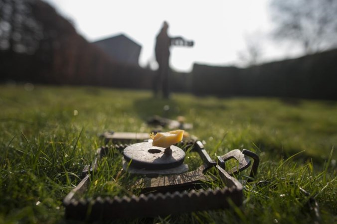Tien vallen in de tuin om rattenplaag te bestrijden