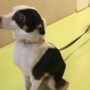 Dierenbescherming redt drie zwaar ondervoede honden uit huis