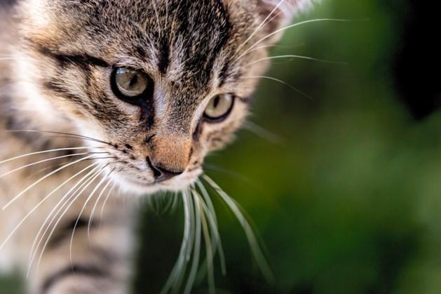 Kattenbeul slaat weer toe: poezen vastgebonden en doodgemarteld