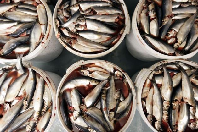 'Vissen sterven gruwelijke dood'