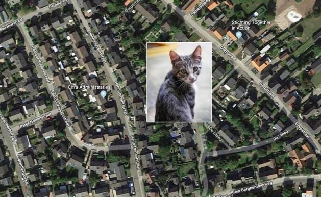 Opnieuw incident met kattenhaat in Ulestraten