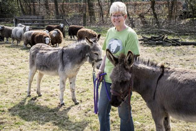 Ezels ingezet om hongerige wolven weg te jagen bij schapen