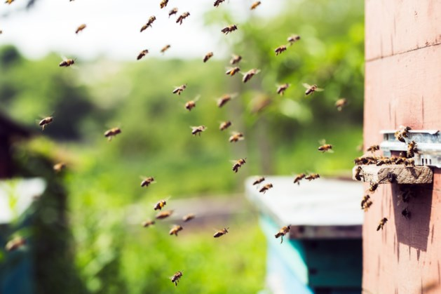 EU verbiedt gebruik bijengif in de open lucht