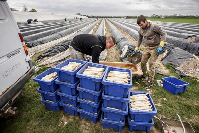 'Polen, we hebben ze keihard nodig in Limburg'